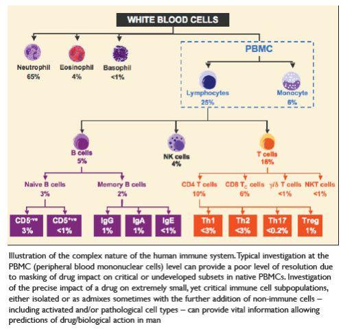 La complessità del sistema immunitario umano (Brady 2008)