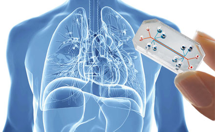 lung-chip